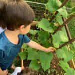 Children planting a survival garden